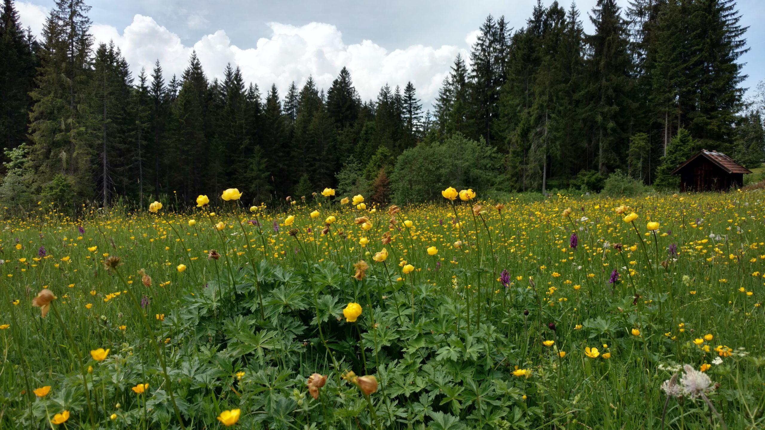 Heilpraktiker: Die Natur ist die Kraft der Medizin
